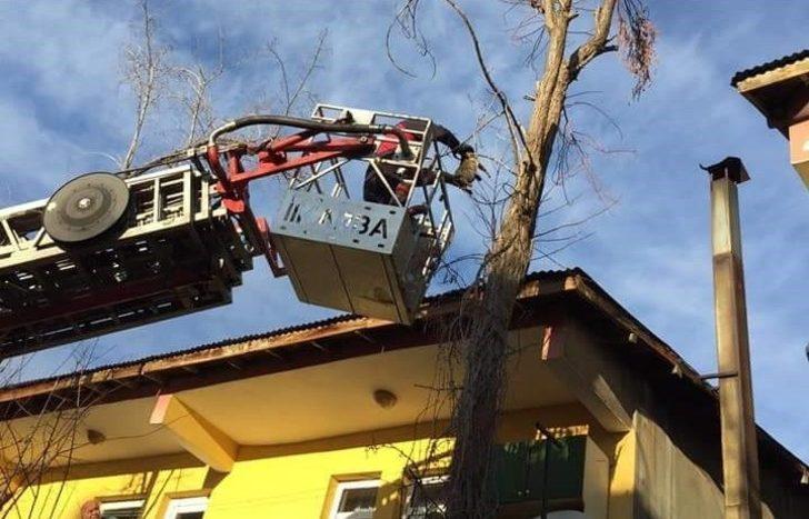 Bingöl'de ağaçta mahsur kalan kedi kurtarıldı