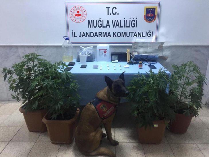Datça'da jandarmadan uyuşturucu operasyonu: 3 gözaltı