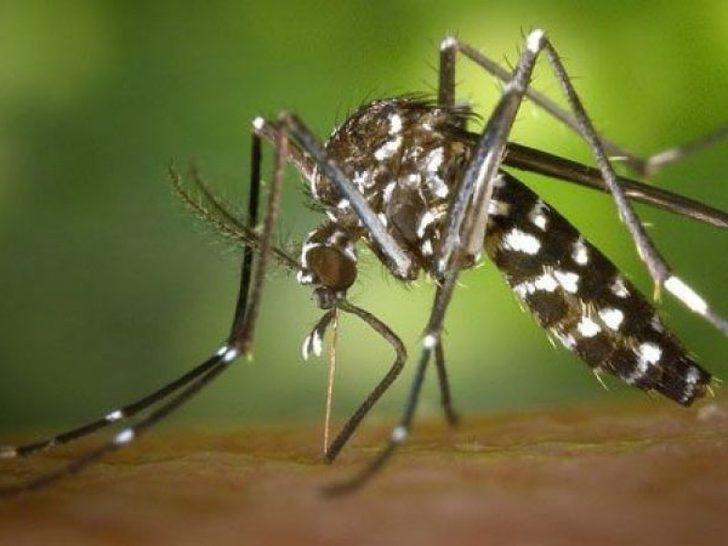 Düzce'de vatandaşlar Batı Nil Virüsü'ne karşı uyarıldı