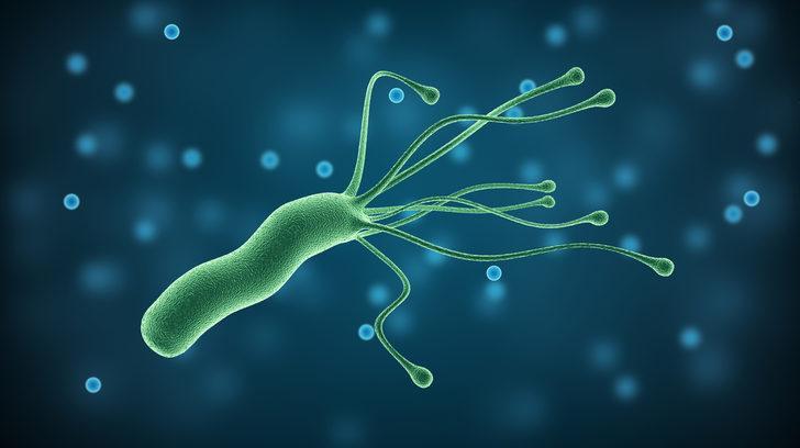 Bakteriden üretilen protein soya fasulyesinin yerini alabilir