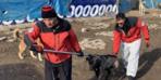 6 yaşındaki çocuk dehşeti yaşadı! 15 köpek saldırdı, kafa derisi parçalandı