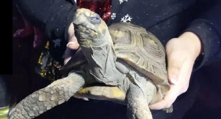 Evde tek kalan 'öfkeli' kaplumbağa yangın çıkardı