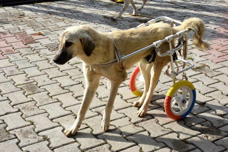 Mersin'de sakat kedi ve köpek yürüteçle hayata tutundu