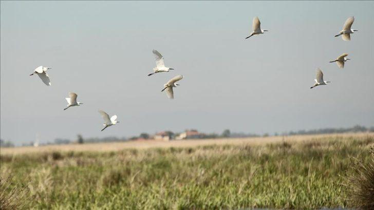 Batı Akdeniz'de kuş popülasyonu yüzde 26 artarak 739 bin 142 oldu