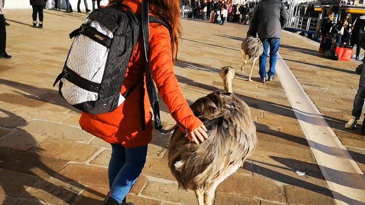 Venedik'te deve kuşlarıyla gezen adama 2 gün uzaklaştırma ve 400 euro ceza