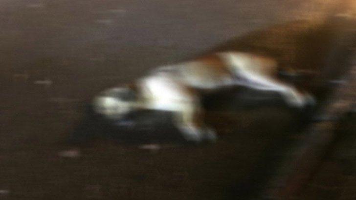 Ankara'da 14 kuş ve 6 köpek zehirlenerek öldürüldü