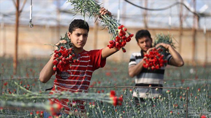Türkiye'de en çok üretilen kesme çiçek 'karanfil' oldu