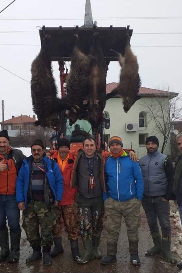 Avladıkları yaban domuzlarını kepçeye asarak sergilediler