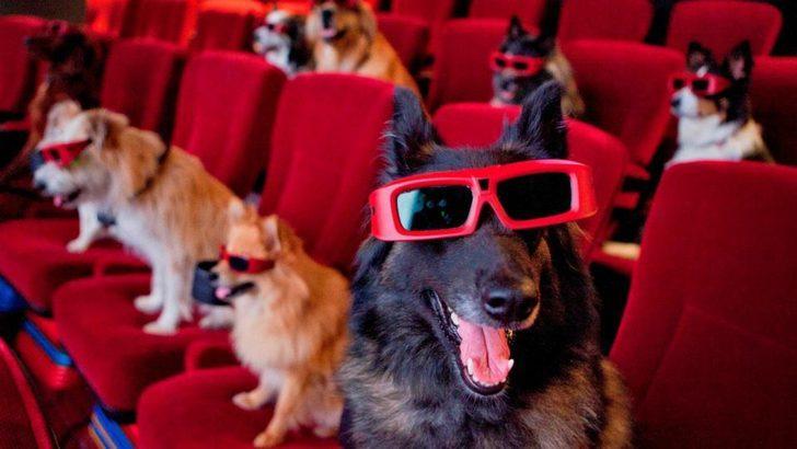 Başrolde can dostlarımız var:  En iyi köpek filmleri