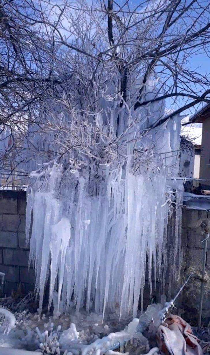 Buz tutan ağacı gören vatandaşlar şaşkınlığını gizleyemedi