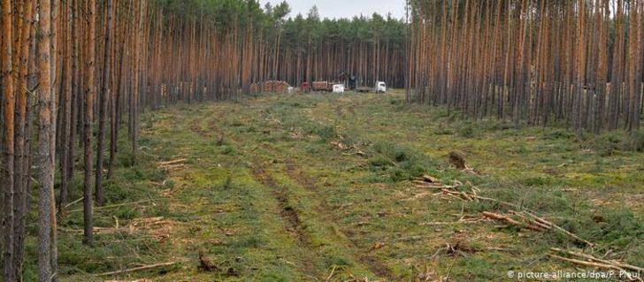 Tesla'nın Almanya fabrikası için ağaç kesimine onay