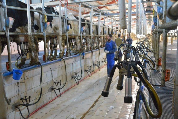 Çiğ Süt Desteklemeleri başladı