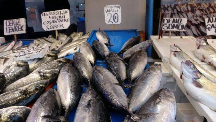 Balıkçı oyunu! Palamut diye satılan o balık bakın ne çıktı...