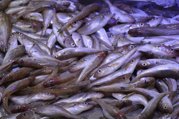 Karadeniz'de mezgit avı arttı
