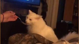 İlk kez dondurma yiyen kediden güldüren tepki