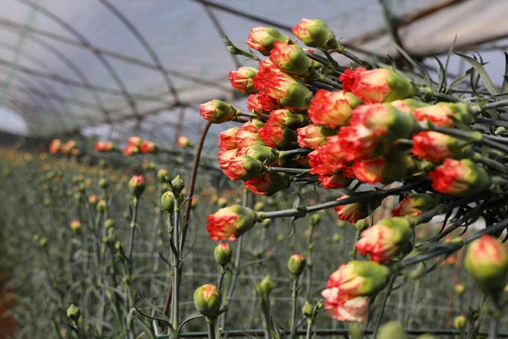 Çiçek sektöründe koronavirüs korkusu