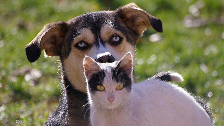 Koronavirüs evcil hayvanlardan bulaşır mı?