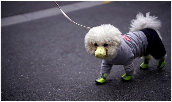 Koronavirüs nedeniyle ilk köpek ölümü yaşandığı iddia edildi