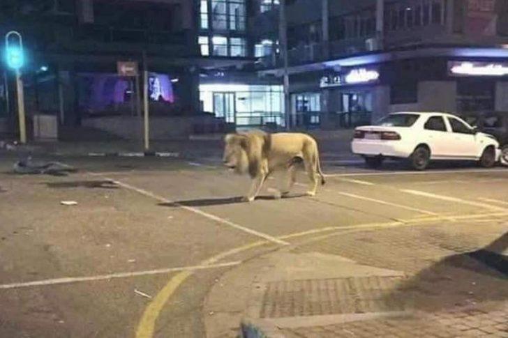 Putin insanları evde tutmak için 800 aslanı sokağa mı saldı?