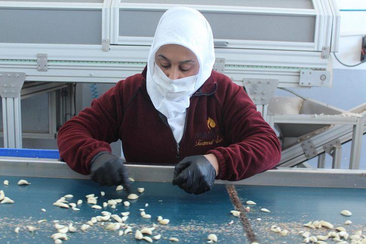 Koronavirüs, sarımsağın fiyatını yüzde yüz artırdı