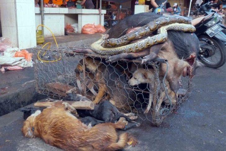 Yeni bir ölümcül virüsün ortaya çıkması korkusuna rağmen vahşi hayvan pazarları satışlara devam ediyor!