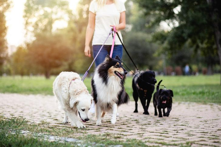 Köpek sahipleri, hayvanlarını kiraya veriyor!