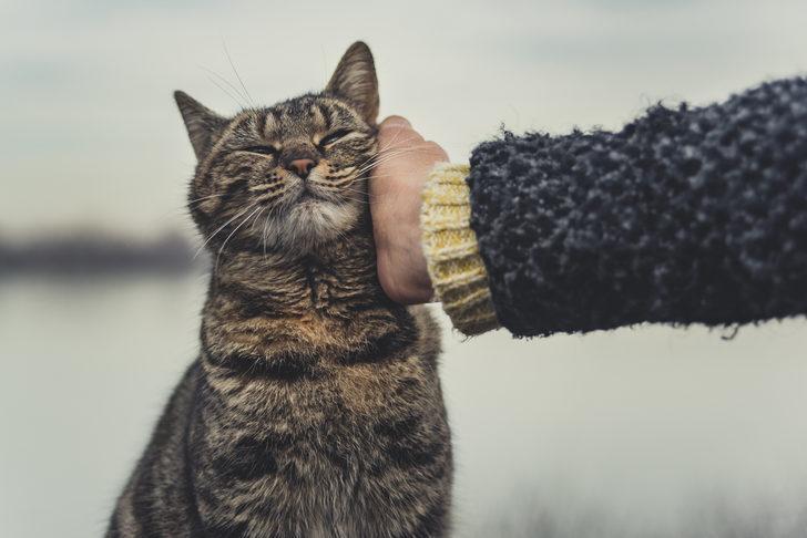 6 kedi hiç semptom göstermeden birbirine virüs bulaştırdı