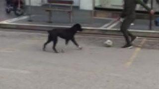 Sokaklar boş kalınca köpekle oynadılar