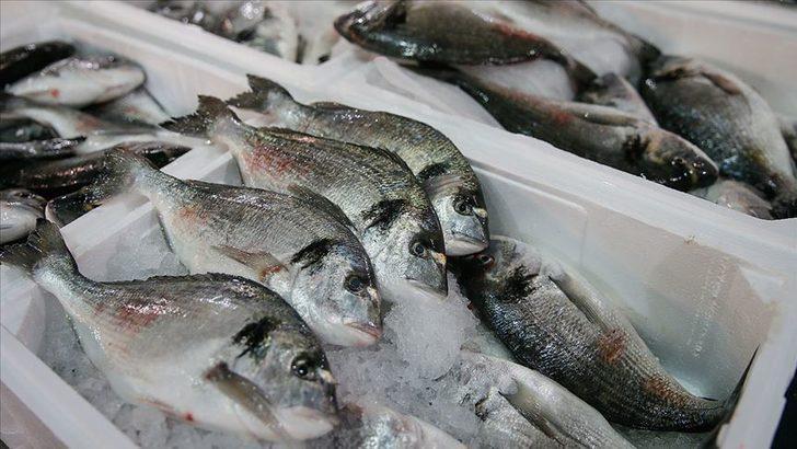 Balıkçılar 1 Eylül'de 'vira bismillah' diyecek! Fiyatalar yarı yarıya düşecek