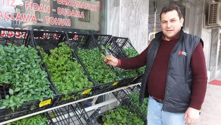 Burhaniye'de sebze meyve dikimine başlandı