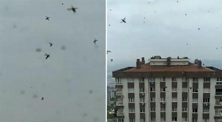 Evinin çevresinde uçuşan böcekleri görüntüledi! 'Hayatımda ilk defa böyle bir görüntüyle karşılaşıyorum'