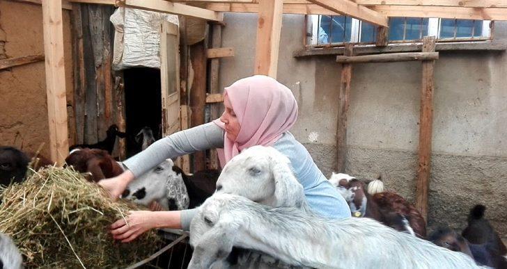 Borç para ile başladığı keçi üretimini bir yılda dörde katladı