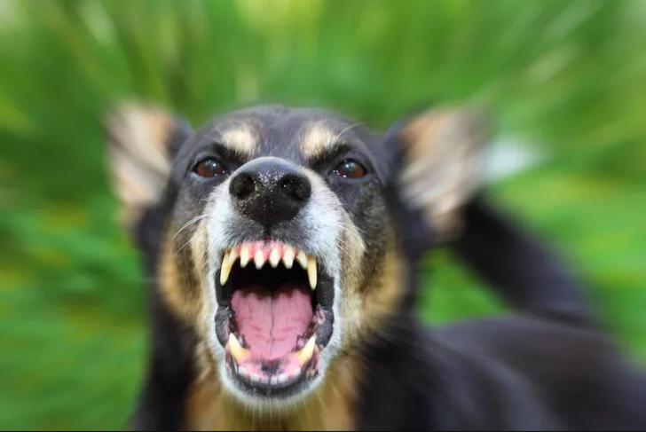 Kırşehir'de köpek dehşeti! 4 yaşındaki çocuk öldü