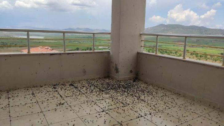 Batman Gercüş'te evin balkonunu kara böcekler bastı