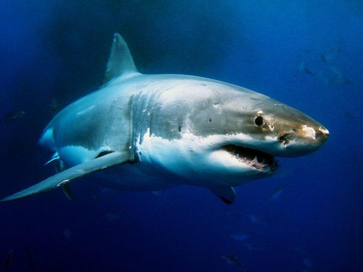 Tek kelimeyle vahşet! Nesli tükenmekte olan 38 bin 500 köpek balığını katletmişler