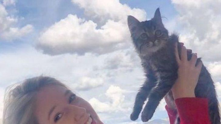Belçikalı öğrencinin Peru'da sahiplendiği kedi için uyutma kararı
