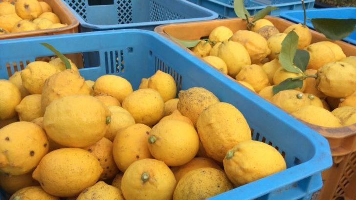 Limon İhracatına Sınırlı İzin Üreticiyi Tatmin Etmedi