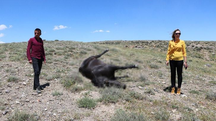 'Kovboy Muhtar'ın atını vurdular