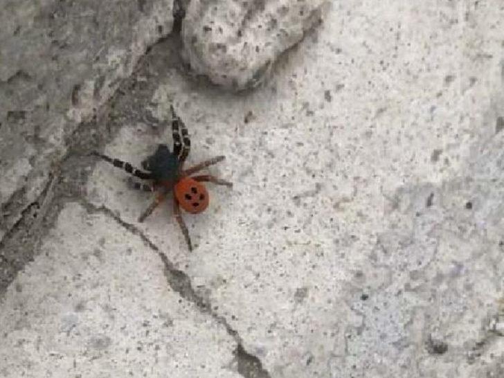 Sosyal medya bu görüntüyü konuşuyor! Ankara'da örümcek paniği