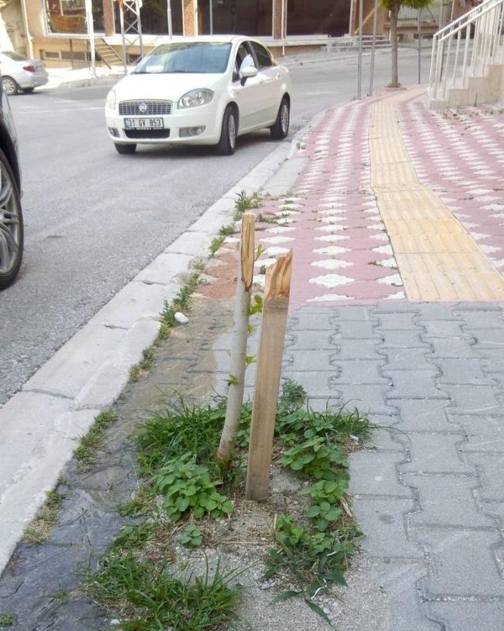 Samandağ'da kimliği belirsiz kişiler, park ve yollardaki ağaçlara zarar verdi