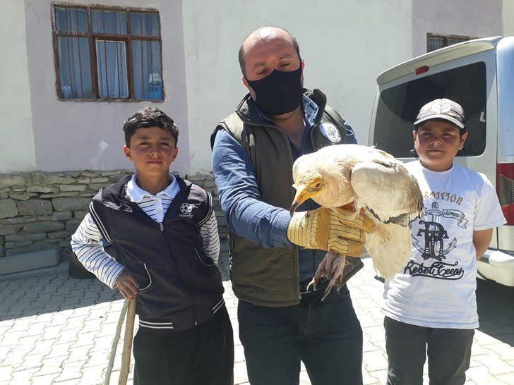 Küçük Akbaba tedavi altına alındı