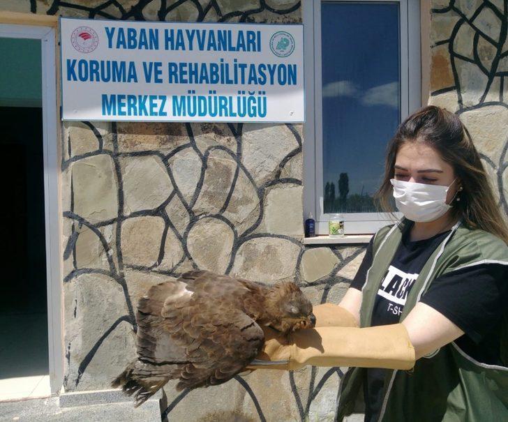 Arı şahini ve kaya güvercin tedavi altına alındı