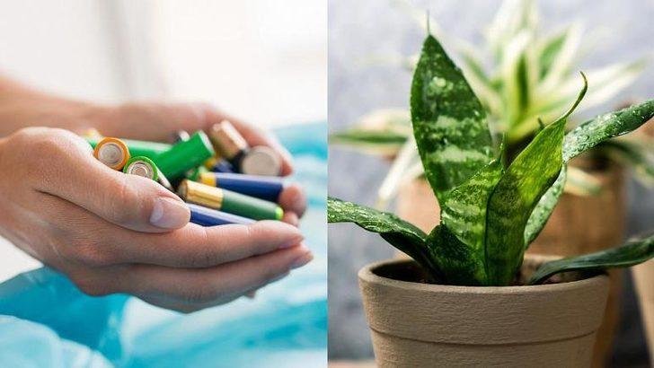 Biten pilleri atmayın! Bitkilere yarayabilir