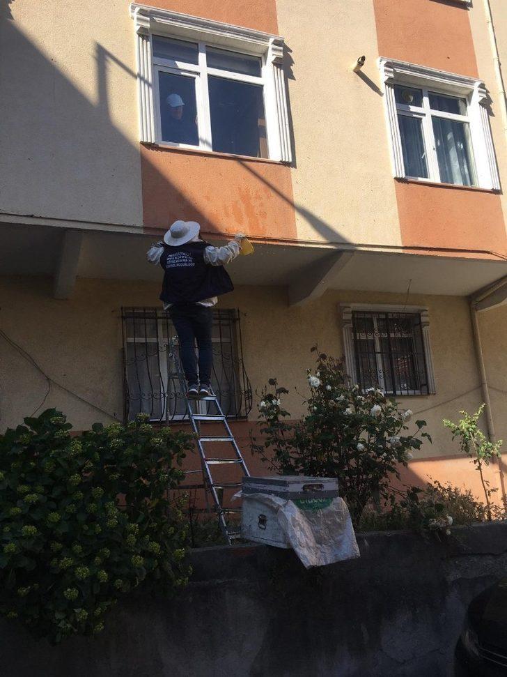 Arılar apartman duvarına yuva yaptı