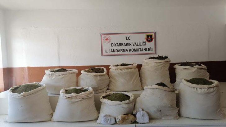 Diyarbakır'da Genetiği Değiştirilmiş Kenevir Yakalandı