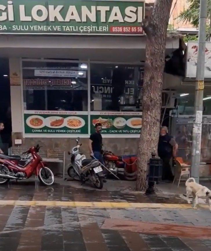 Manisa'da sokak köpeğini sopayla döven adama ceza yağdı