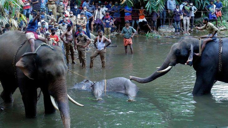 'İçine patlayıcı yerleştirilen meyveyi yiyen' hamile filin ölümü Hindistan'da infial yarattı