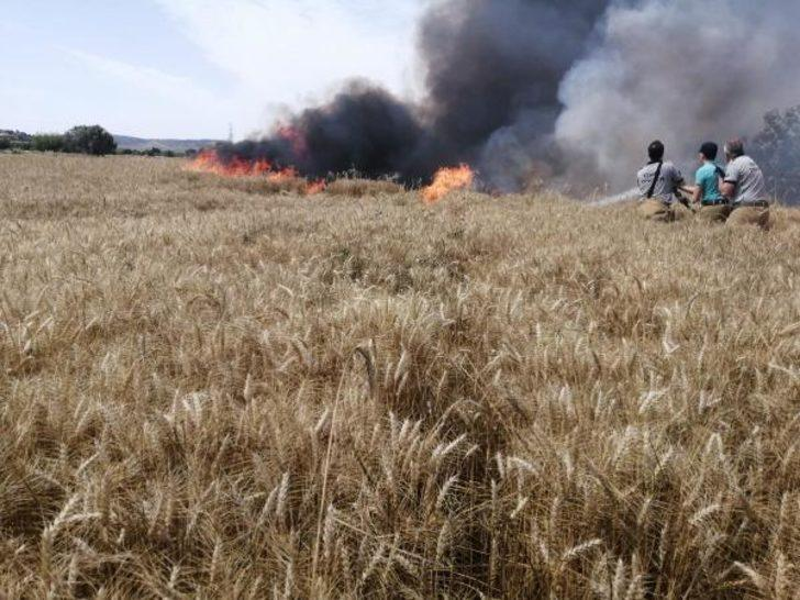 Foça'da, tarlada çıkan yangında 40 ton 'buğday' kül oldu