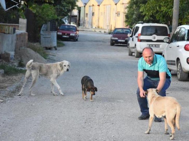 Mahalle ayağa kalkmıştı! Kedi ve köpek ölümlerinin nedeni belli oldu