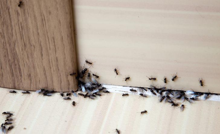 Sadece salatalık ve tarçın ile karıncaları evinizden uzak tutabilirsiniz! İşte o yöntemler...